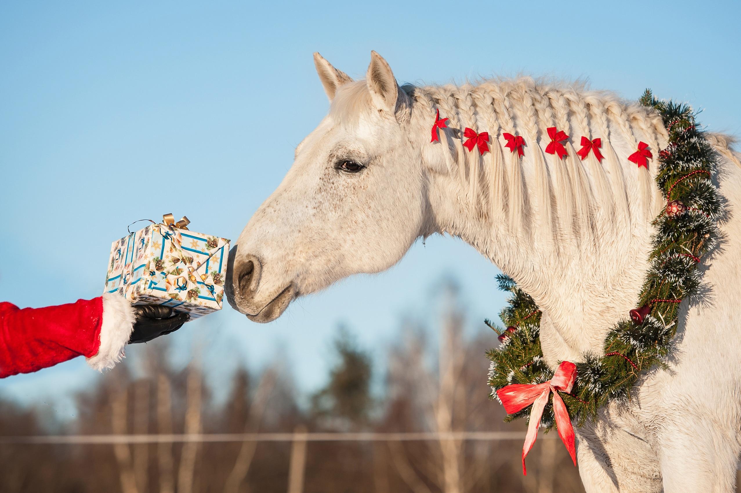cheval a noel, photos HoCaPa
