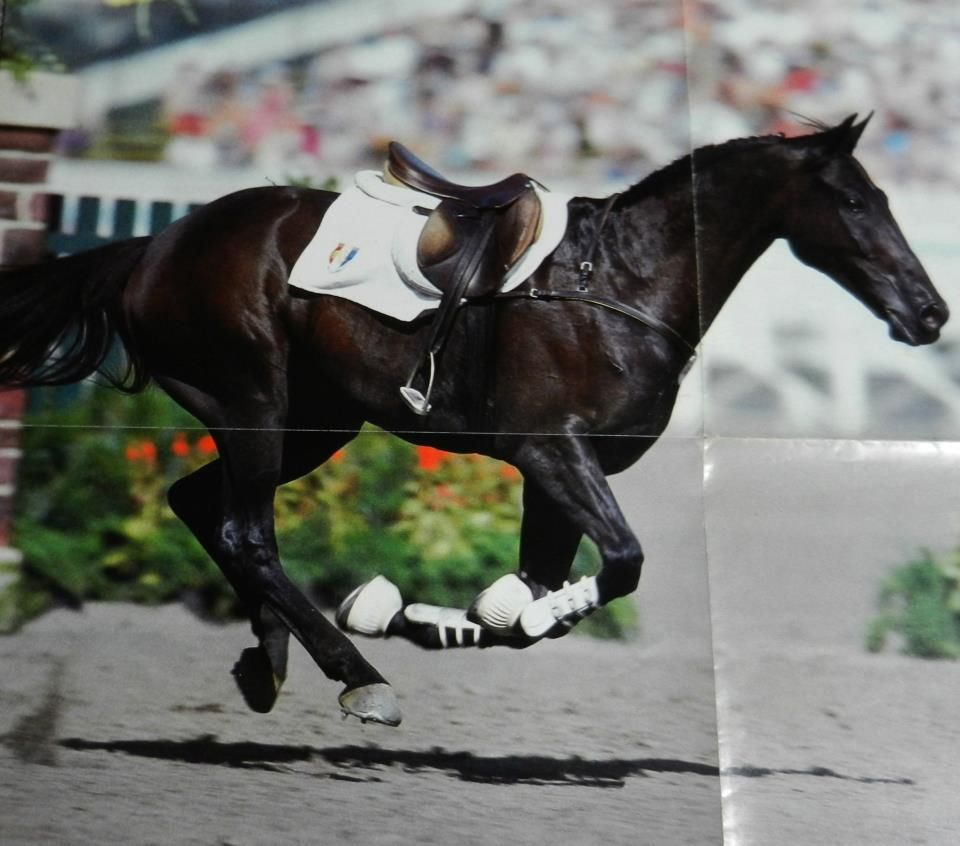 hocapa jappeloup cheval
