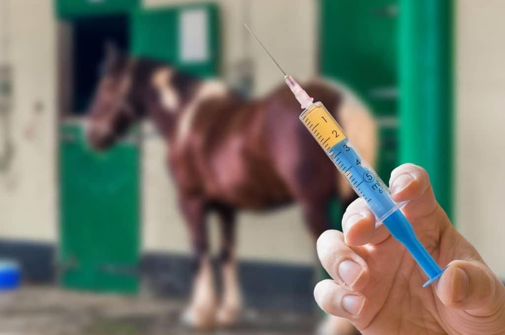 Vaccin, soins, Hocapa, vétérinaire
