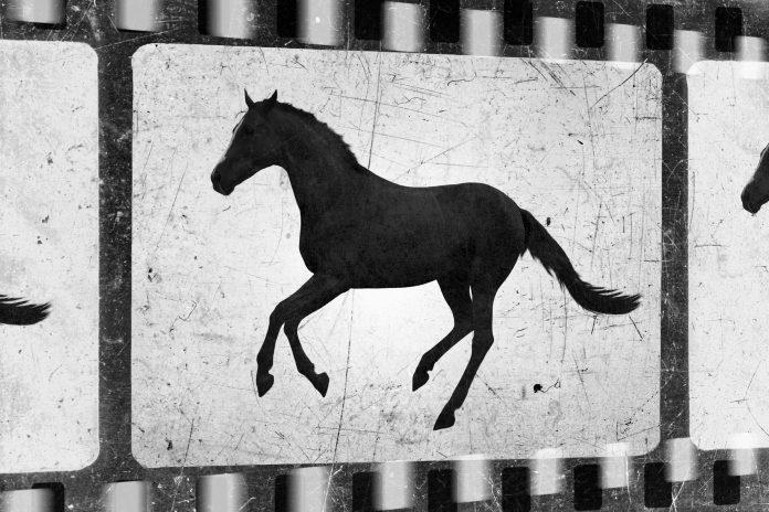 bande, film cheval, HoCapa