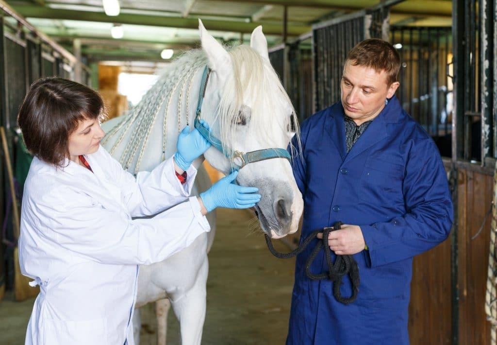 Consultation vétérinaire - HoCaPa