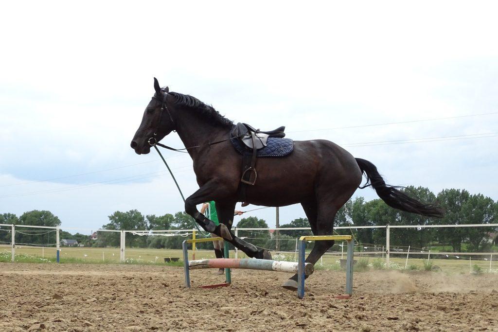 acheter un cheval- HoCaPa