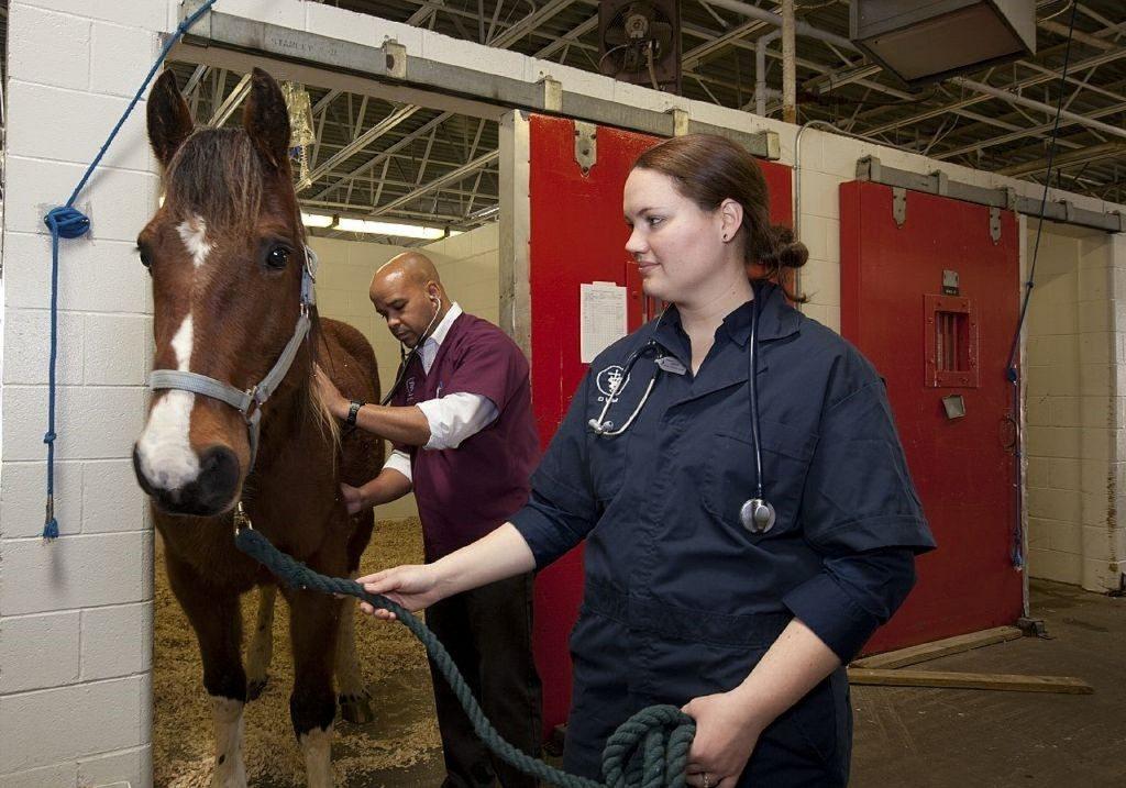 vétérinaire, acheter un cheval, HoCaPa