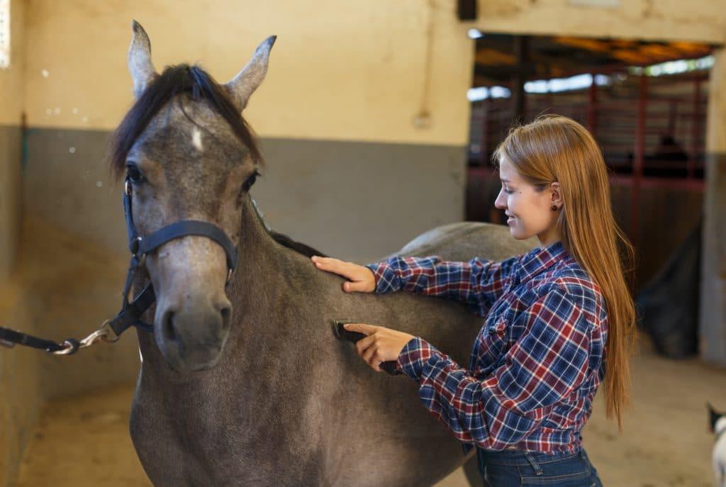 Jeune fille tond un cheval